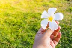 Flor da folha nas mãos foto de stock