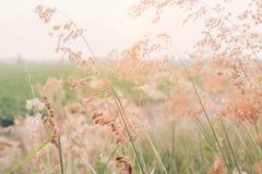 Flor da grama Fotos de Stock
