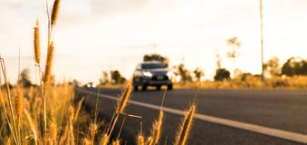 Flor da grama com fundo borrado do carro e da estrada asfaltada, fotografia de stock royalty free
