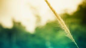 Flor da grama da mola no fundo fresco da natureza do nascer do sol Imagem de Stock