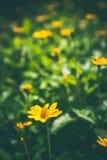 Flor da grama no fundo borrado do jardim Imagens de Stock Royalty Free