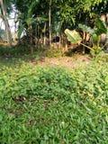 flor da grama da vila foto de stock
