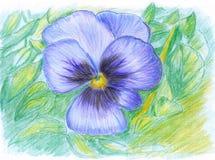 Flor da Ilustração-Borboleta Ilustração Royalty Free