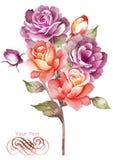 Flor da ilustração da aquarela no fundo simples Foto de Stock