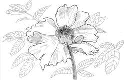 Flor da ilustração do esboço Ilustração Royalty Free