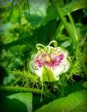 Flor da manhã imagem de stock