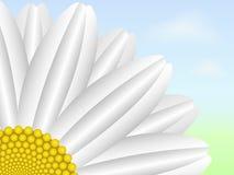Flor da margarida ilustração stock