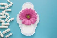 Flor da margarida do gerbera e da menstruação almofadas e tampões cor-de-rosa diariamente Foto da concepção da higiene da mulher  Imagem de Stock