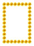 Flor da margarida do quadro Fotos de Stock