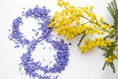 Flor da mimosa do dia das mulheres internacionais Foto de Stock