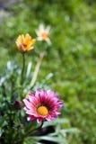 Flor da mola Fotografia de Stock Royalty Free