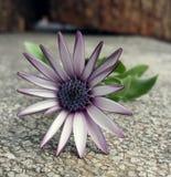 Flor da mola Fotos de Stock