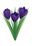 Flor da mola - açafrão Foto de Stock Royalty Free