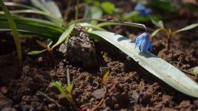 Flor da mola da beleza Eu amo esta vez! foto de stock royalty free