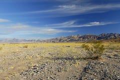 Flor da mola em Death Valley Imagens de Stock