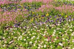 Flor da mola no campo foto de stock
