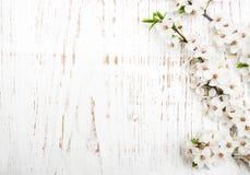 Flor da mola no fundo de madeira foto de stock