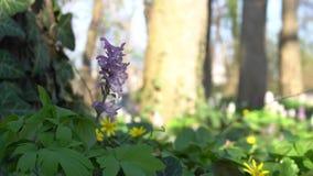 Flor da mola no vento slowmotion vídeos de arquivo