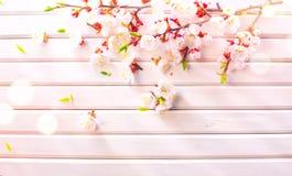 Flor da mola da P?scoa no fundo de madeira branco da prancha Flores do abric? da P?scoa no projeto de madeira da arte da beira ?r fotos de stock royalty free