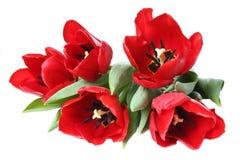 Flor da mola - ramalhete de tulips vermelhos Imagens de Stock Royalty Free