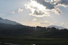 Flor da montanha em fabulas escuros do olhar do fundo Imagem de Stock