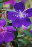 Flor da montanha em fabulas escuros do olhar do fundo Imagem de Stock Royalty Free