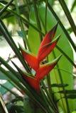 Flor da montanha em fabulas escuros do olhar do fundo Foto de Stock Royalty Free