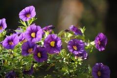 Flor da montanha em fabulas escuros do olhar do fundo Fotografia de Stock