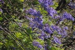 Flor da montanha em fabulas escuros do olhar do fundo Imagens de Stock Royalty Free