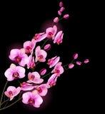 Flor da orquídea Imagem de Stock Royalty Free