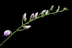Flor da orquídea imagem de stock