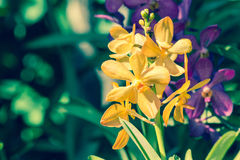 Flor da orquídea no jardim no inverno, mola para o projeto Imagens de Stock Royalty Free