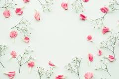 Flor da pétala no fundo branco com espaço da cópia foto de stock