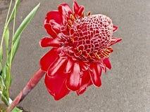 Flor da flor da paixão fotografia de stock