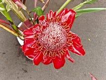 Flor da flor da paixão imagem de stock