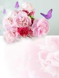Flor da palha ou eterno fotografia de stock royalty free