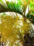 A flor da palmeira com o sunflare efetuado Fotos de Stock