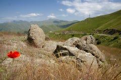 Flor da papoila na montanha Imagens de Stock Royalty Free