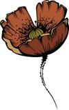 Flor da papoila vermelha ilustração do vetor
