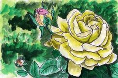 Flor da peônia Ilustração do Vetor