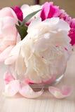 Flor da peônia Imagem de Stock