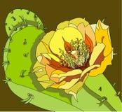 flor da pera espinhosa Foto de Stock Royalty Free