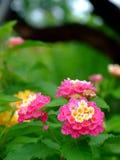 Flor da pilha Foto de Stock Royalty Free