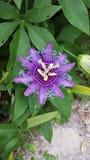 Flor da planta da natureza Foto de Stock
