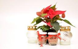 Flor da poinsétia com vela Imagens de Stock Royalty Free