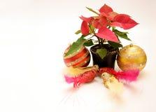 Flor da poinsétia e ornamento dos pombos Foto de Stock Royalty Free