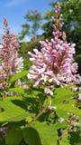 Flor da primavera Imagens de Stock Royalty Free