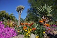 Flor da primavera em Califórnia em jardins botânicos de Taft, Ojai C fotos de stock