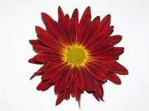 Flor da queda Fotografia de Stock Royalty Free