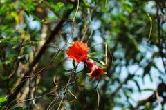 Flor da romã em um jardim fotos de stock royalty free